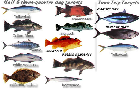 Fish Targets - Images of current targets as of May 2009
